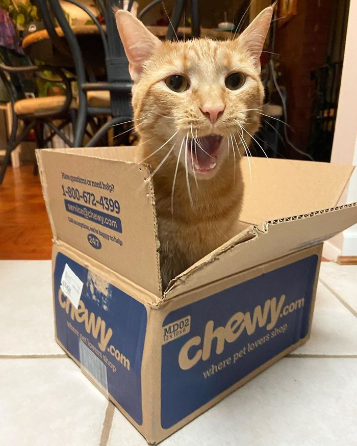 Is a cat really rambunctious without a box?