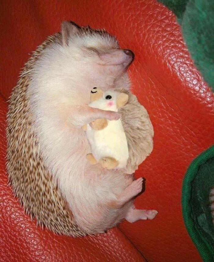 13. Hedgehog