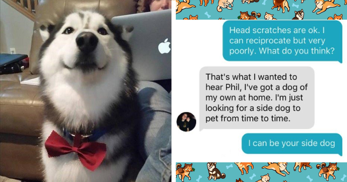 Guy Make A Tinder Profile For His Alaskan Malamute And The Responses Are Adorable