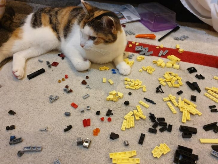 This cat won't let anyone finish a puzzle as long as they own the house.