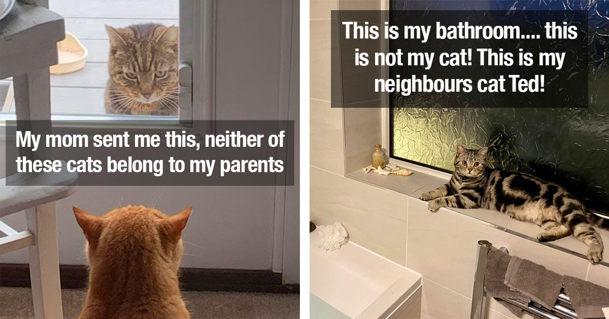 'My House, Not My Cat' Photos That Will Make You Wish For A 'Stranger Cat' Of Your Own