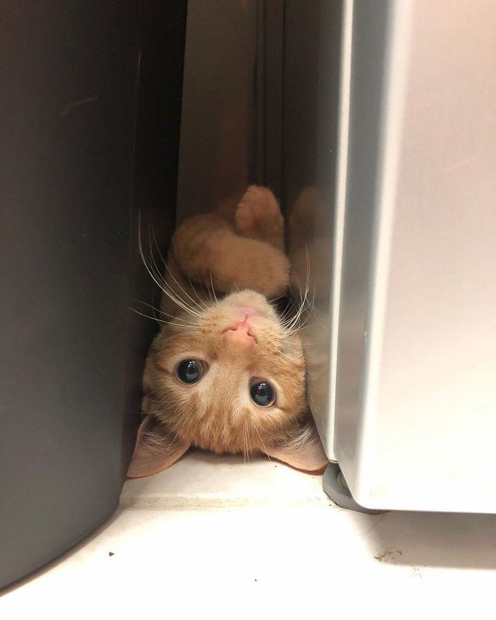 I'm not even sure what I'd do if I came across my cat like this. LOL.