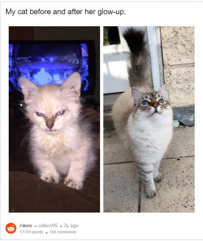 2. True glam cat!