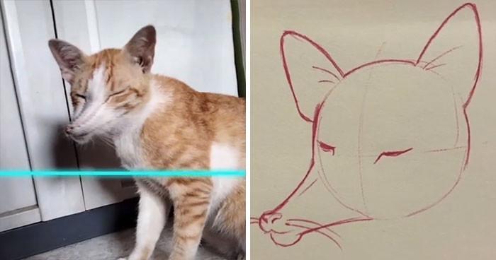 13. Is it a cat? Is it a fox?