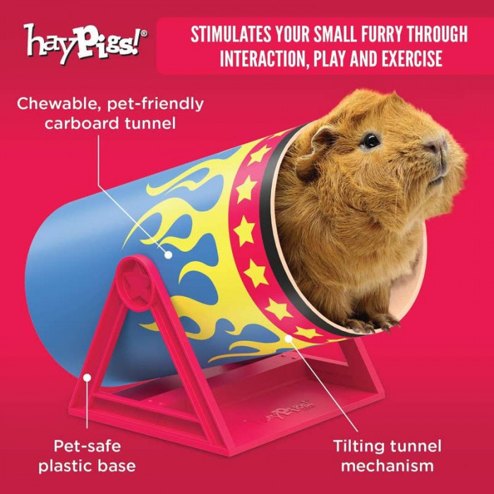 12. Circus Themed Guinea Pig Toy