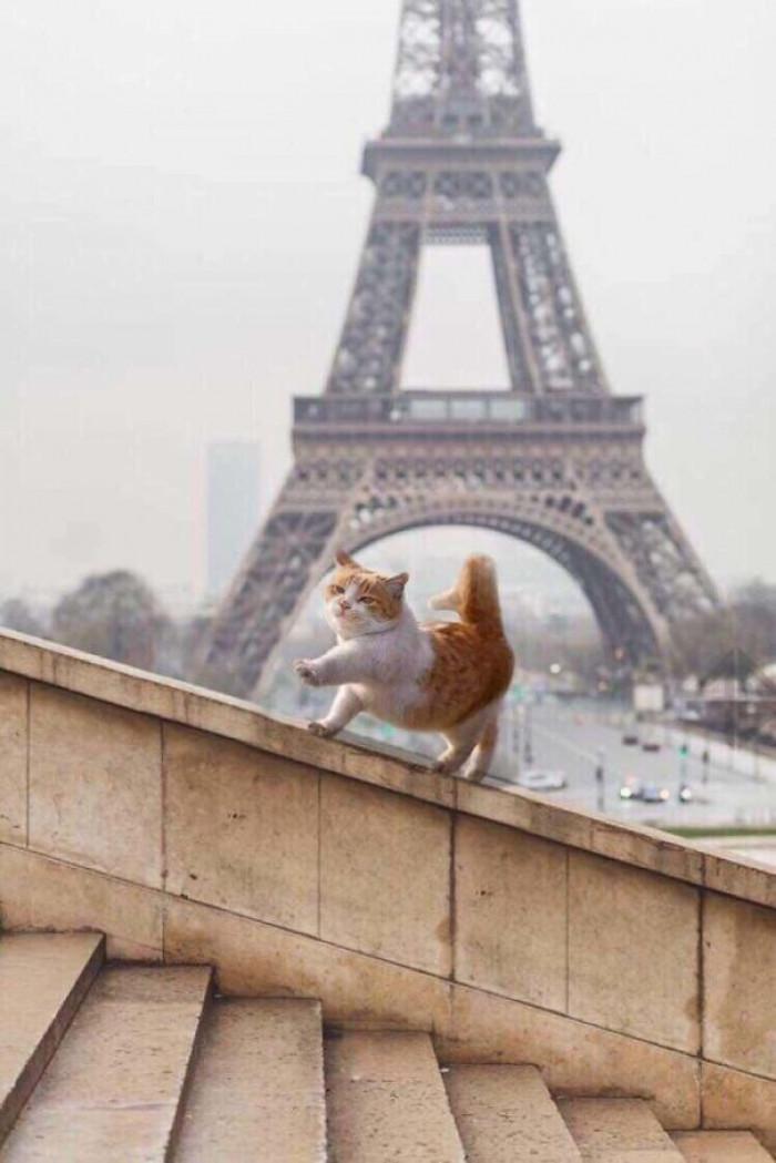 14. Ah, Paris....