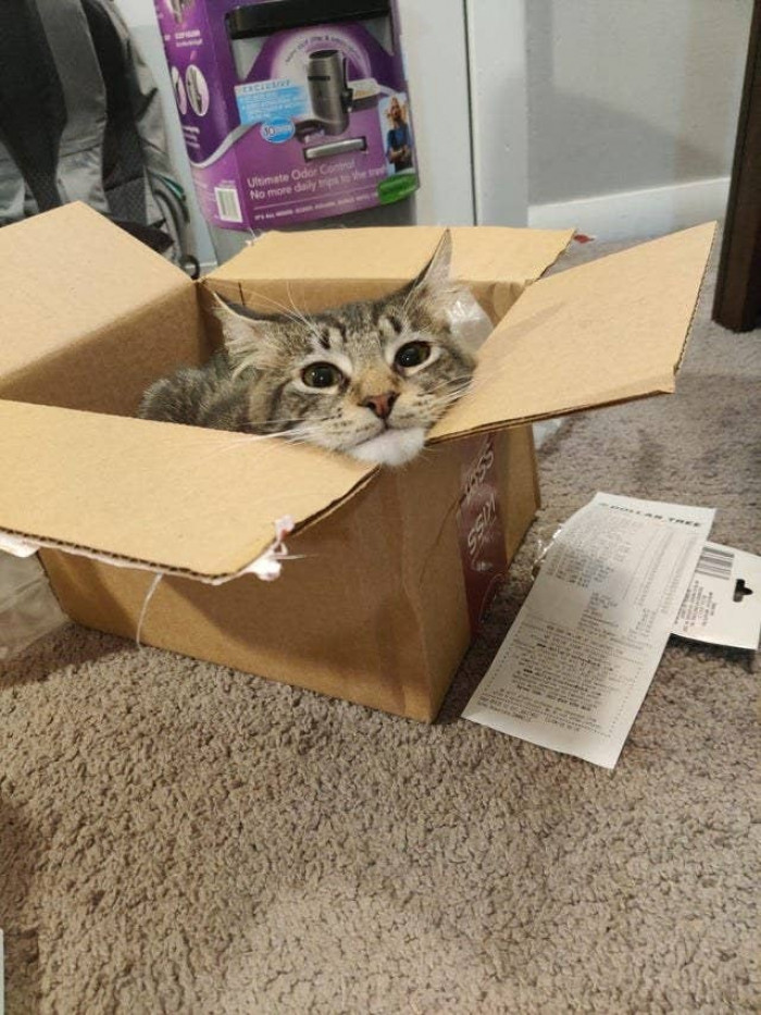 The easiest way to trap a cat