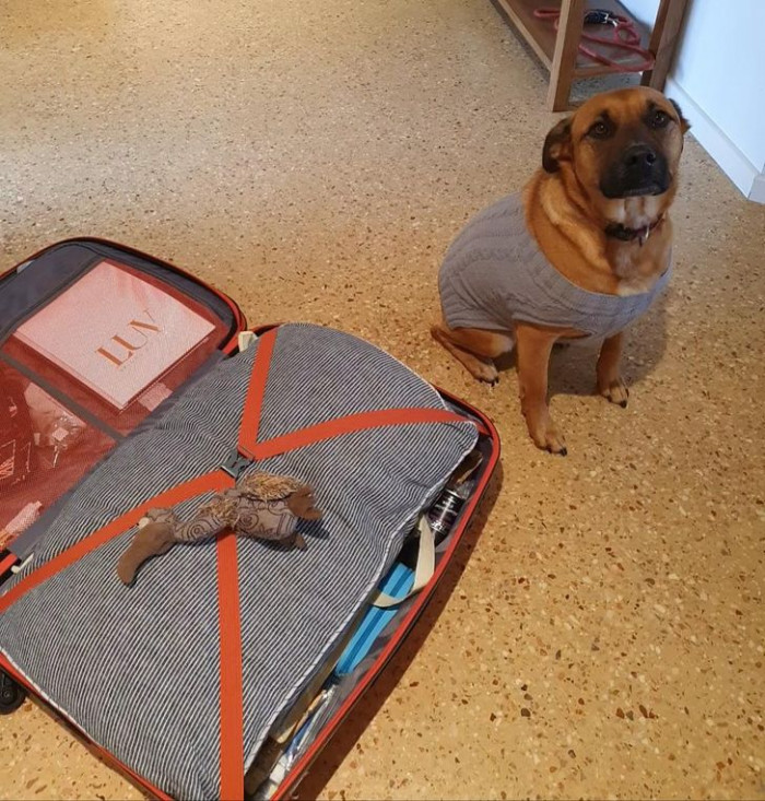 """9. """"Bonnie put her favorite toy in my packed suitcase. Oh man, the feels!"""""""
