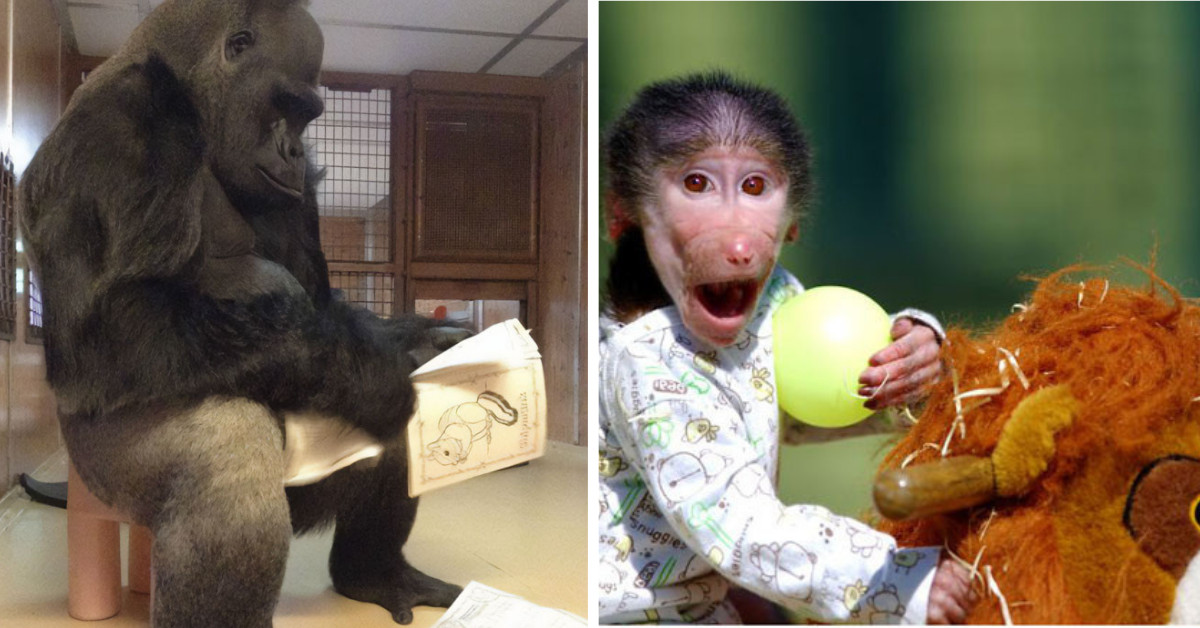 40+ Hilarious Pics Of Monkeys Just Monkeying Around