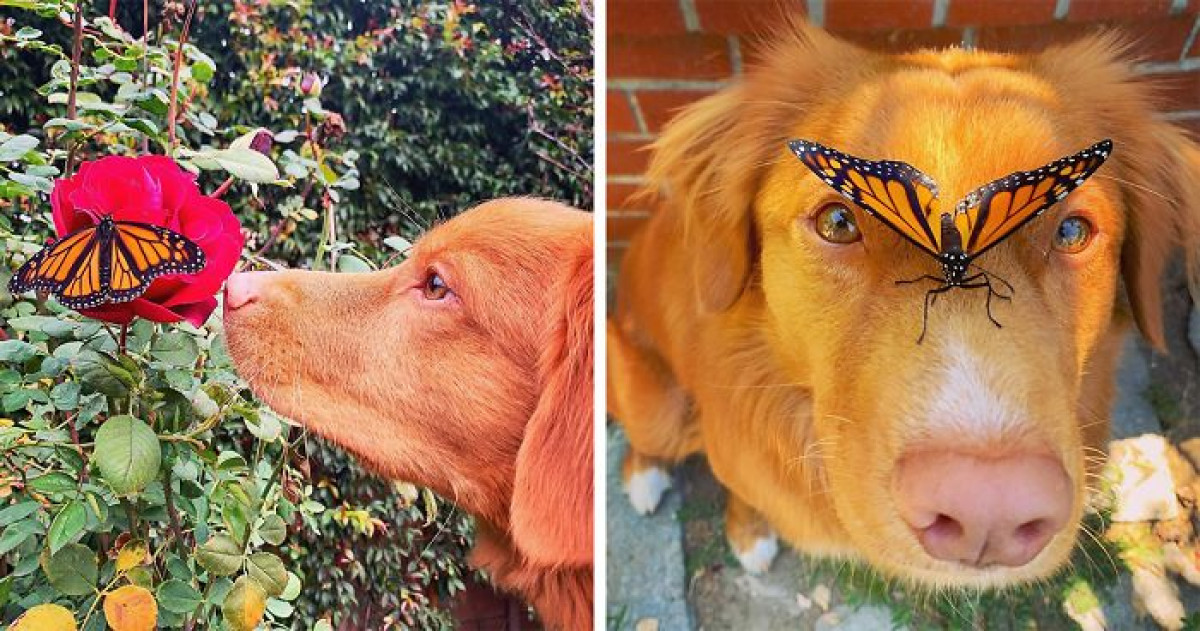 Adorable Dog Makes Friends With All The Butterflies In His Garden