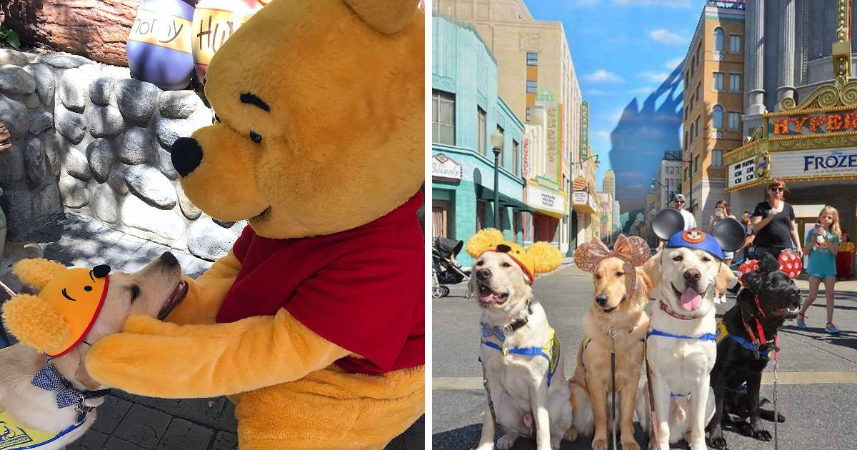 These Service Dogs In Training Took A Field Trip To Disneyland And They Are All Good Bois