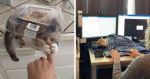 40 Photos Of Cats Hanging Out In Places They Shouldn't Be