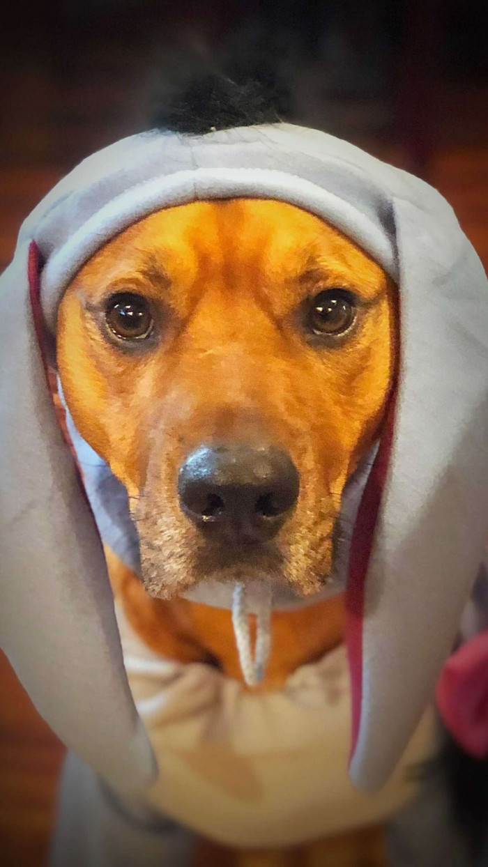 When Myko is frightened, he barks - a lot! His parents were struggling to find something that would help calm him, so they decided to get creative.