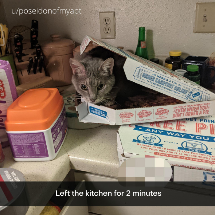 14. You know what they say about cats and pizza boxes!