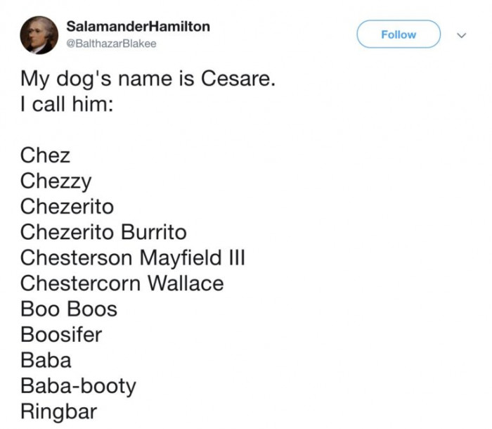 A dog named Cesare