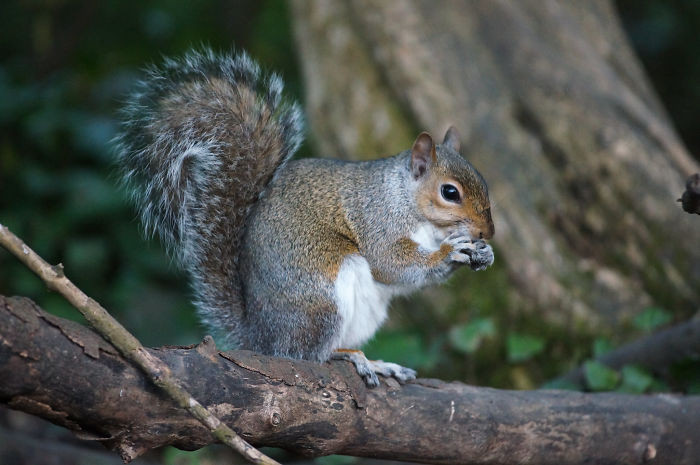 #28 Hundreds Of Trees Become Seedlings Every Year Because Of Squirrels Forgetting Where They Buried Their Food