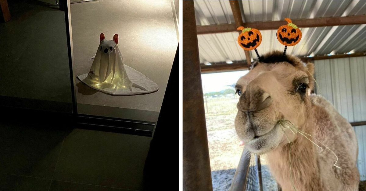 50 Photos Of Pets With Awesome Halloween Costumes