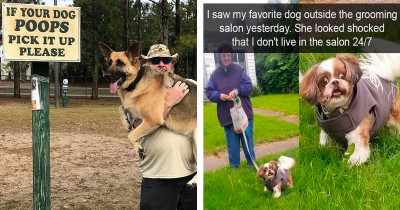40 Honest And Wholesome Memes That Perfectly Describe A Life With A Dog
