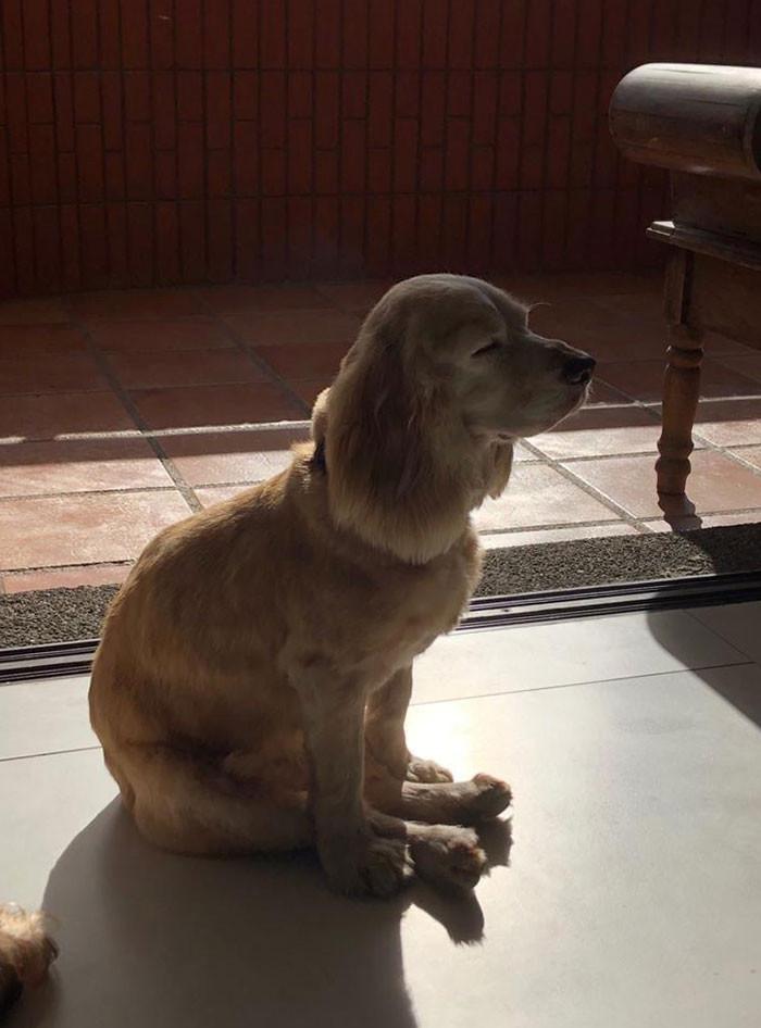 #50 My Dog Need Help