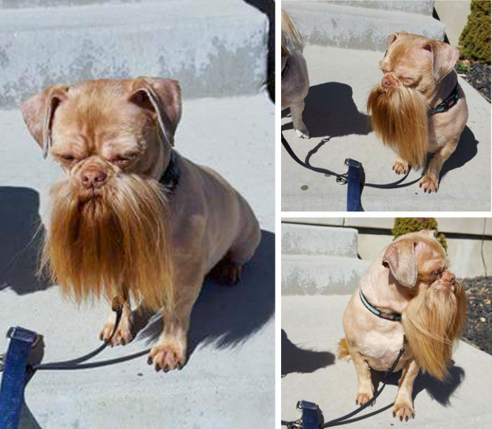 This dog is ready to bust myths
