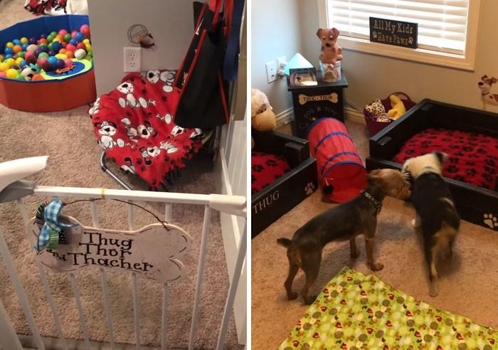#19 Doggy playroom.