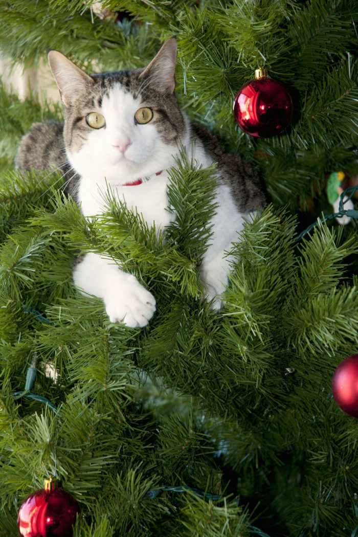 Christmas Trees: The Best Cat Toy EVER