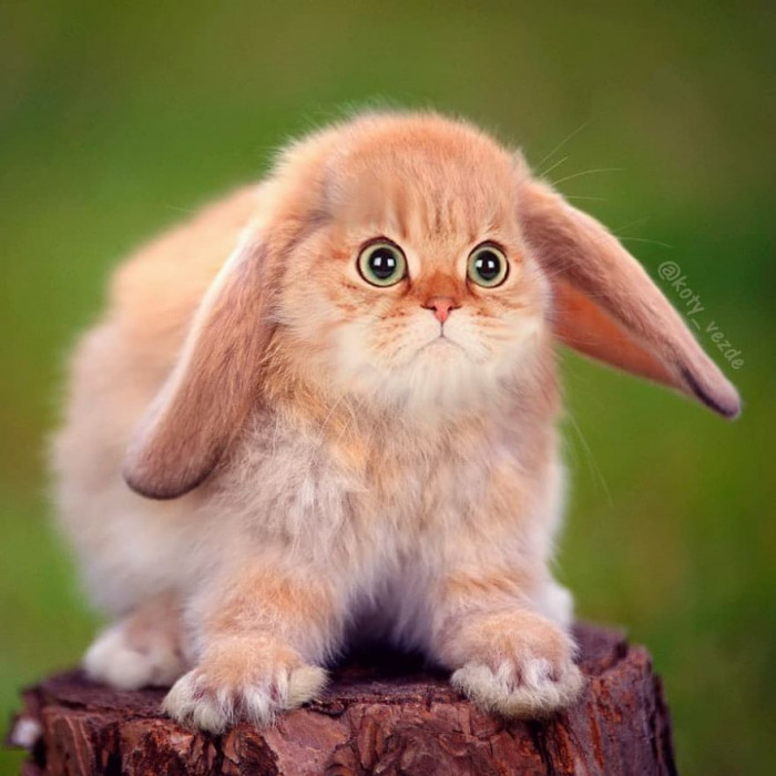 #12 Who Wouldn't Want a Bunny-Cat?