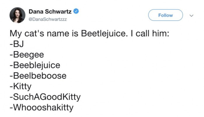 A cat named Beetlejuice