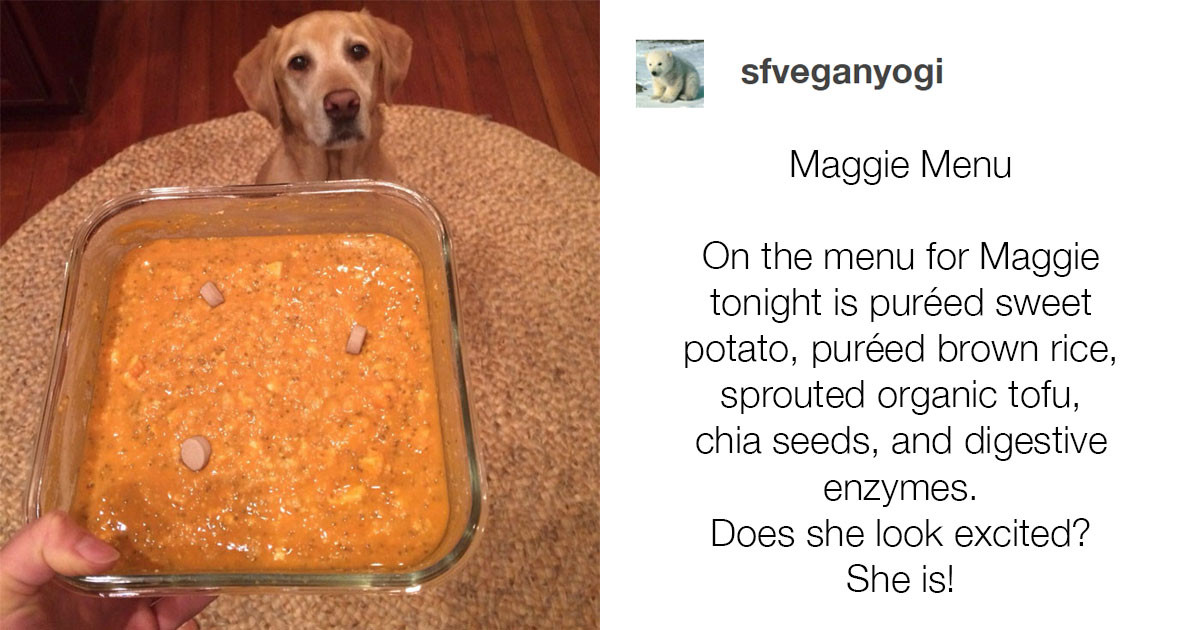 "Veterinarian Lashes Out At Vegan Who Proudly Shared A Photo Of Her Dog ""Excited"" For His Vegan Dinner"