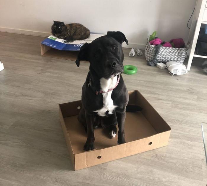 "16. ""My cat friend sits in box, so I sits in box. Mom says I'm the best doggo."""