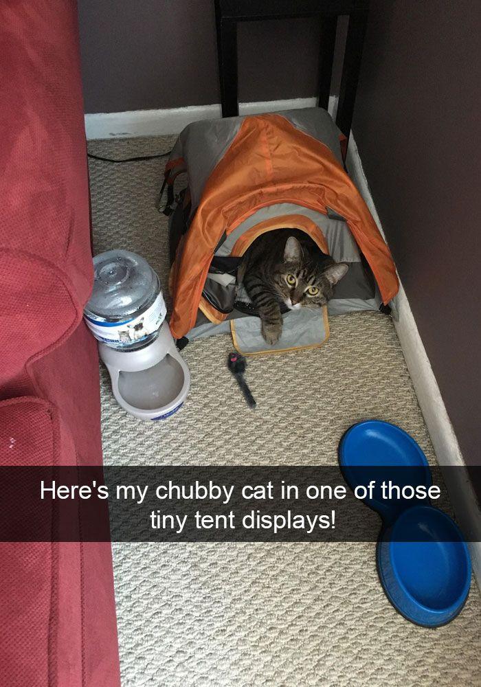 13. Big Kitty, Little Tent