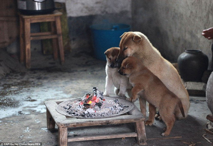 Dogs gather around the fire pit