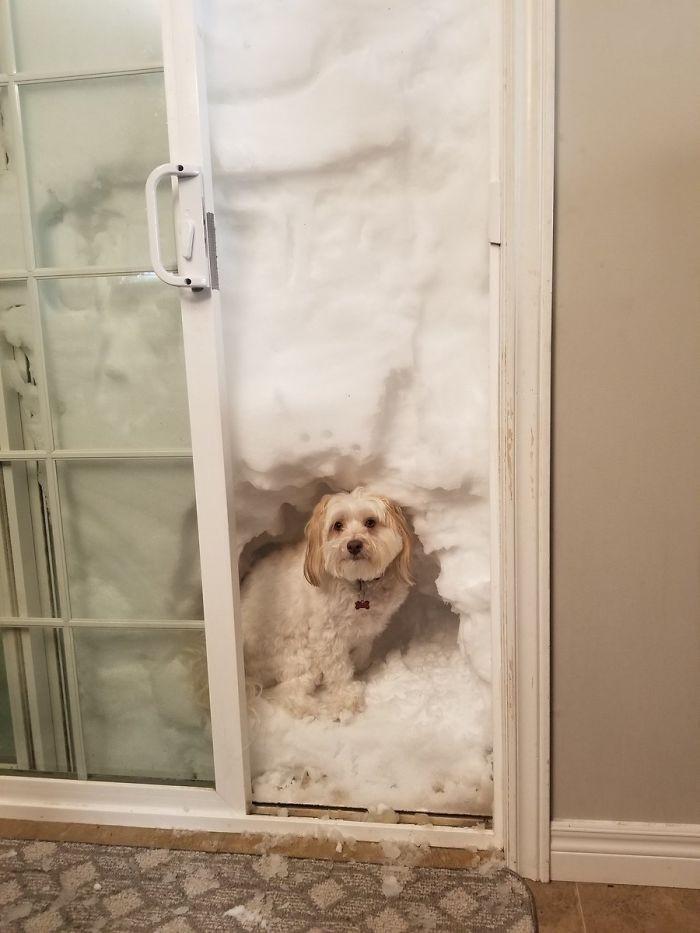 Snow kennel!