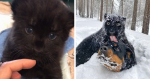 A Panther Rejected Her Baby, And Now It's Growing Up With A Kind Woman And Her Rottweiler