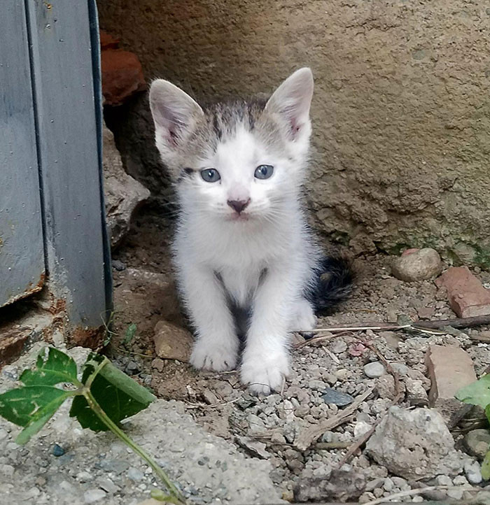 36. This Was The Day This Little Guy Found Me And Got Himself Adopted