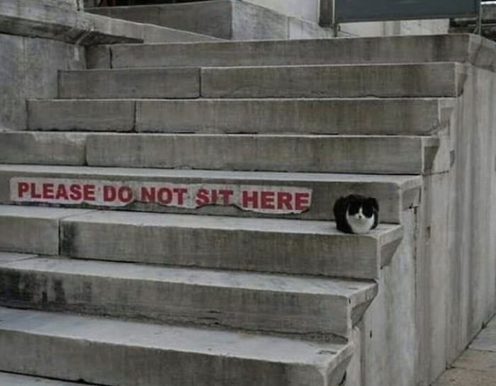 4. Rules don't apply to cats