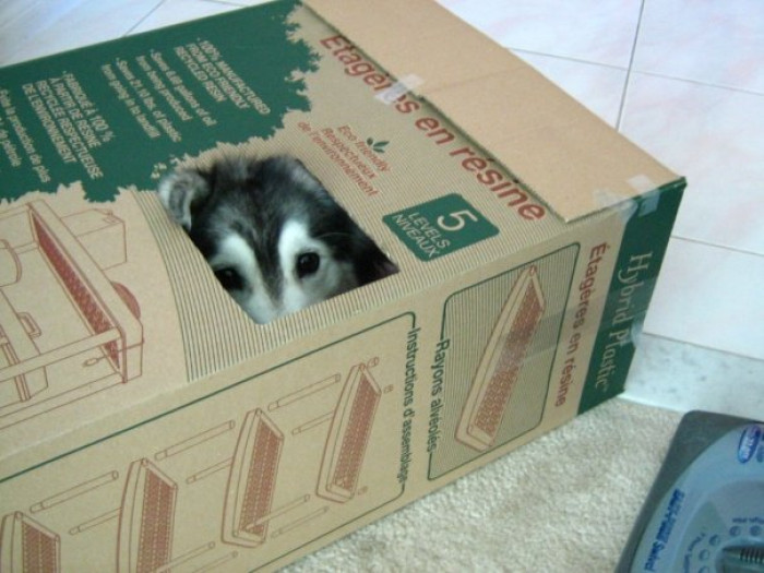And of course, she's also obsessed with boxes