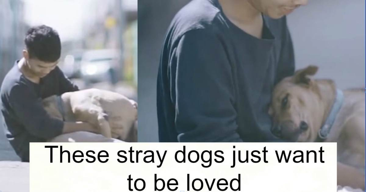 Boy Gives First Hugs To Stray Dogs In Thailand And The Resulting Photos Are Beautiful