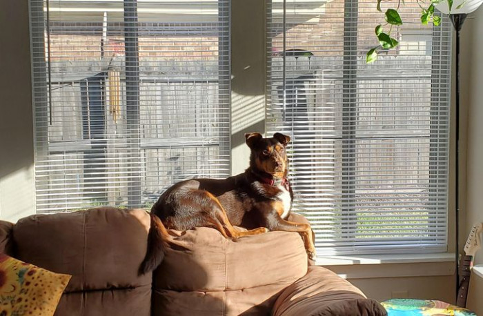 """19. """"My 50 lb dog thinks he's a cat."""""""
