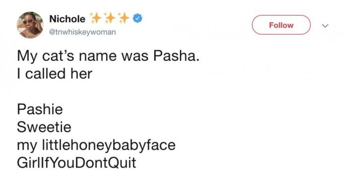 A cat named Pasha