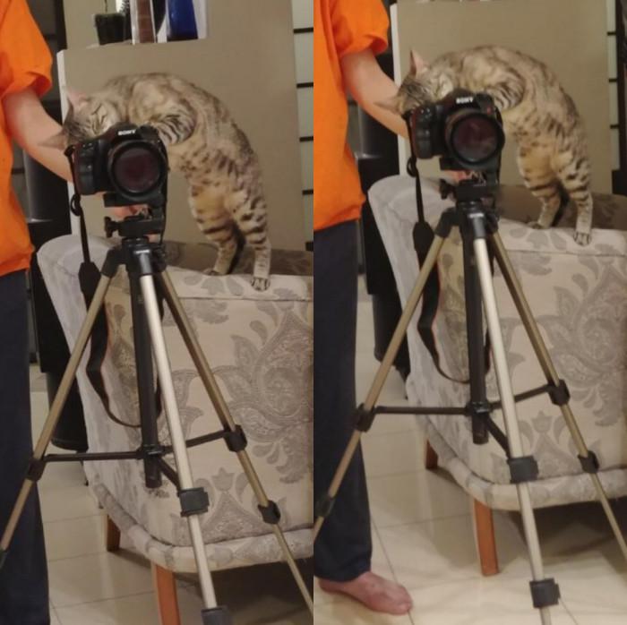 5. Cinematographer