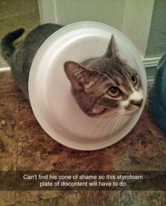 1. Cat owners get creative.