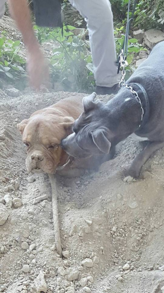 Goddess kept encouraging the poor dog during the rescue.