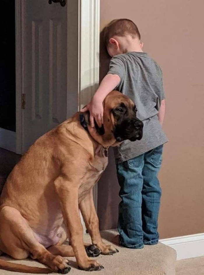 2. This strong and dedicated guard dog remained loyal even in this kid's most difficult moments.  Yeah, timeouts.