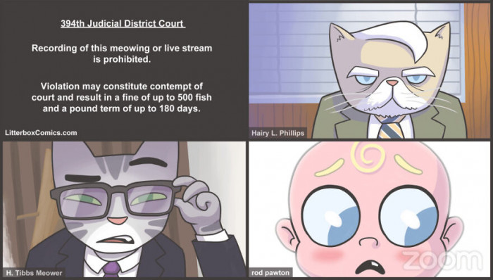 #17 Zoom Cat Lawyer
