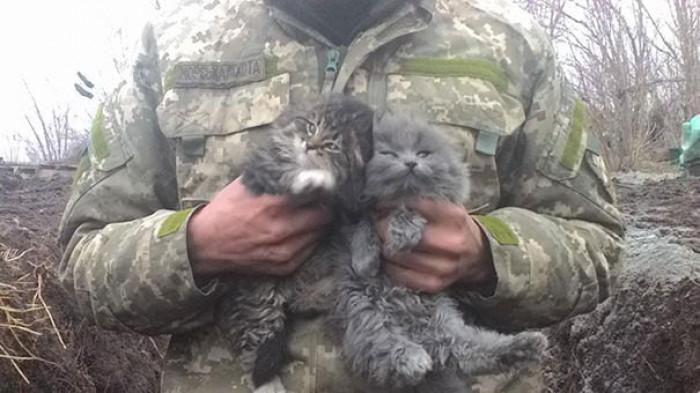 7. Two balls of fur