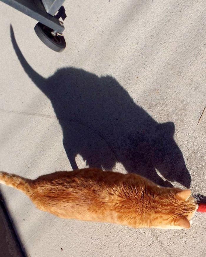 #6 Rat Cat