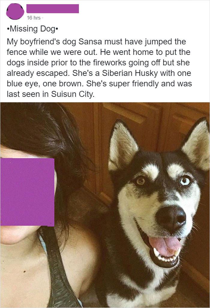 The missing doggo post