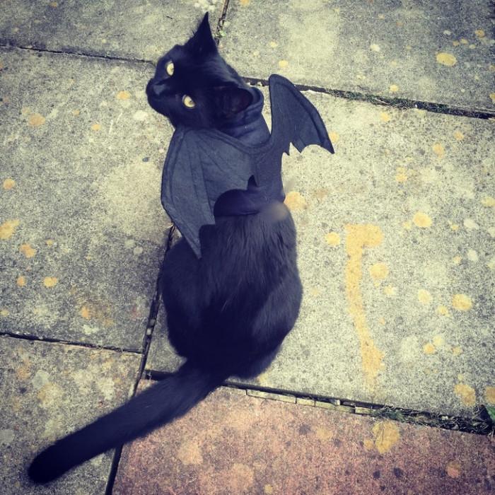4. Bat-Cat... Na na na na na na na na na na na na.