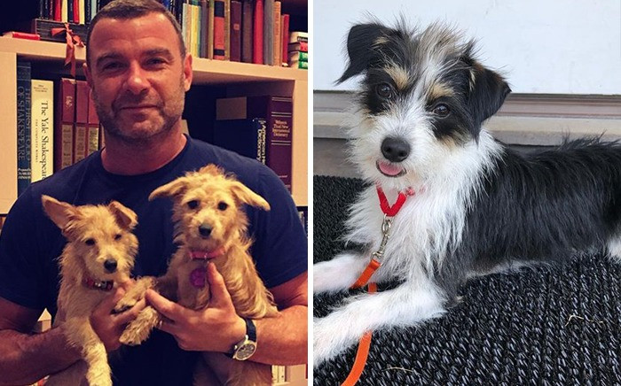 2. Liev Schreiber & Woody, Willow And Scout